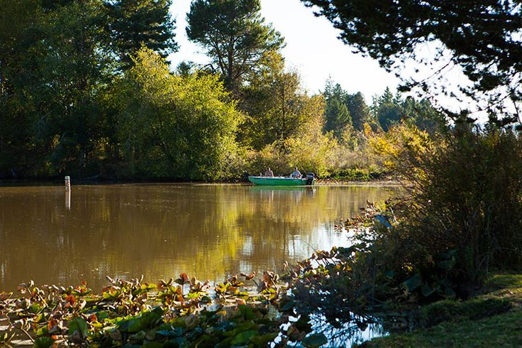 17 best images about silver cove rv resort on pinterest for Silver lake washington fishing