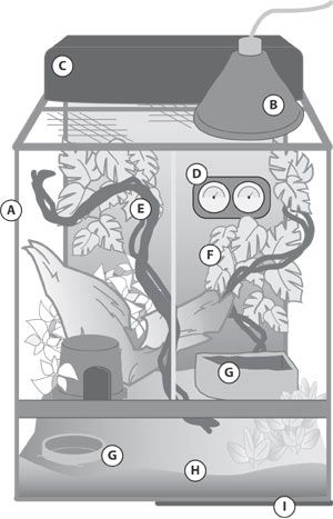 How to Create the Ideal White's Tree Frog Habitat