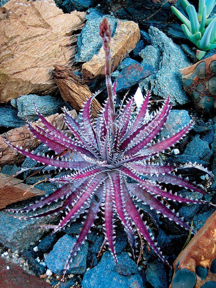 purple succulents and cactus