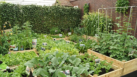 1000 images about vegetable and fruit gardens on for Fruit and vegetable garden design
