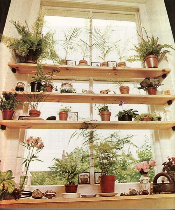 plant shelves in window - I need to do this I have so many plants