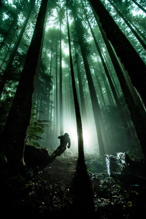 For more great pics, follow bikeengines.com #downhill #dh #biking #woods #forest #photography