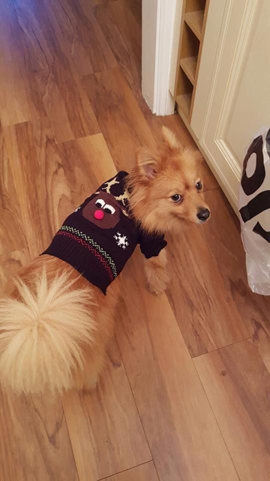 Dog Called Teddy Itchen Woolston Southampton Dogs Teddy Southampton