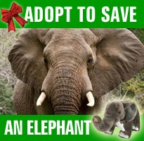 God Bless elephants for their gestation period being 22 months!