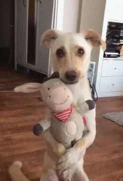 A Toy for a Dog
