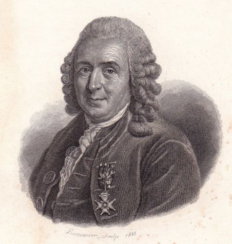 Portrait-XIXe-Carl-von-Linne-Carl-Linneus-Suede-Sweden-Nomenclature-Binominale