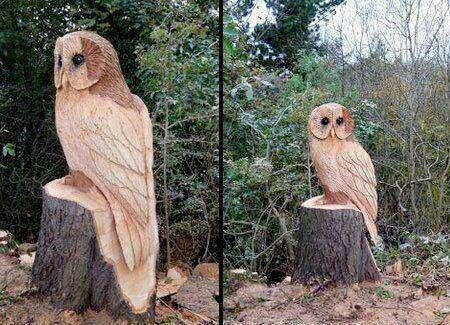 I have seen bears, people, eagles and even a mushroom but this is the first owl!