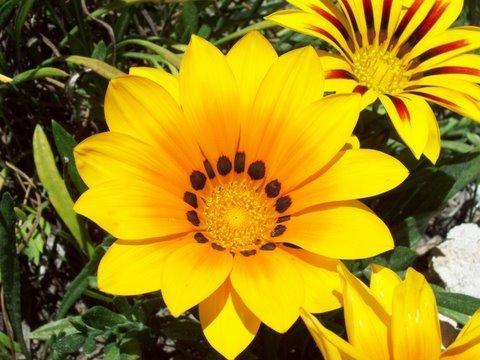 Nombres de flores amarillas con 7 letras - Imagui