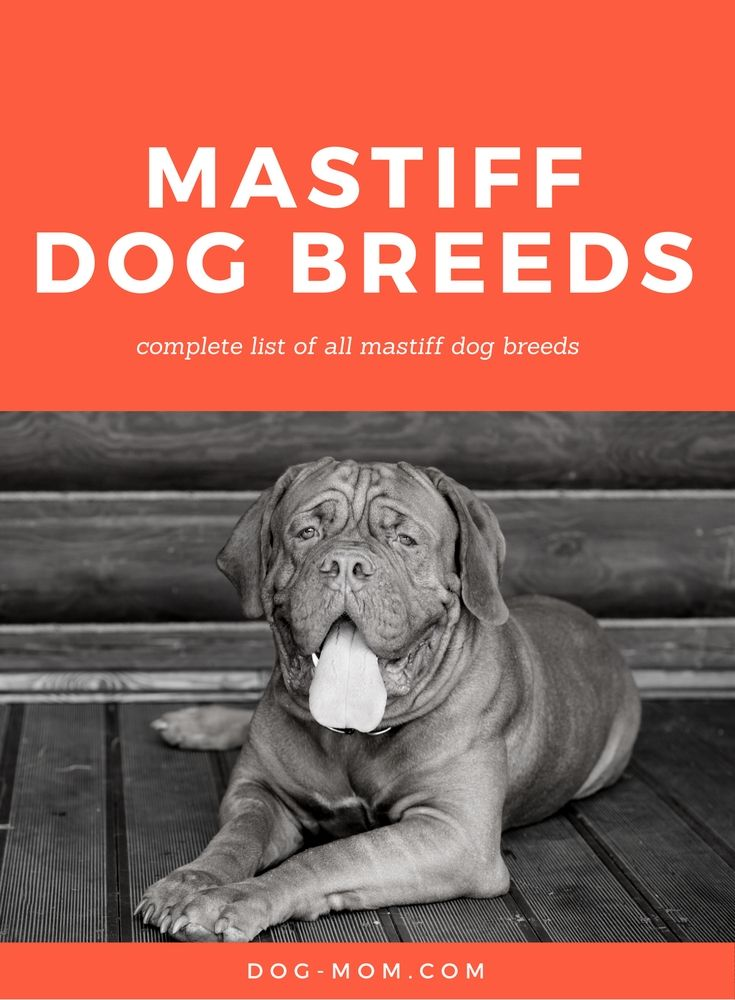 Complete List of Mastiff Dog Breeds | mastiffs, giant breeds, large breeds, dog…