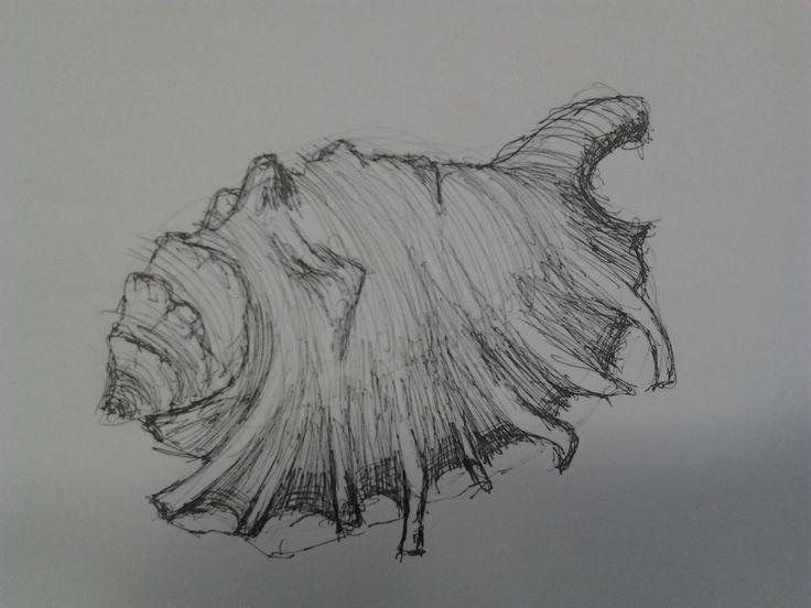 Studijní skica mušle (tužkou a fixem)