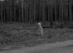 The picture was taken in the early 1930s by the sender's grandfather, who lived in Alaska. The entitiy was first seen when the grandfather was on his way to a lake. He chased the entity until he got close enough to take this one picture. It was some four months before the photograph was developed, being in in a remote, sparsely populated area. The sender received the picture from his grandfather only last week. His grandfather died the day after giving him the photo, and relating his story.
