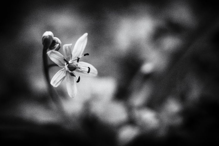 Flower by Kuti Gergő on 500px
