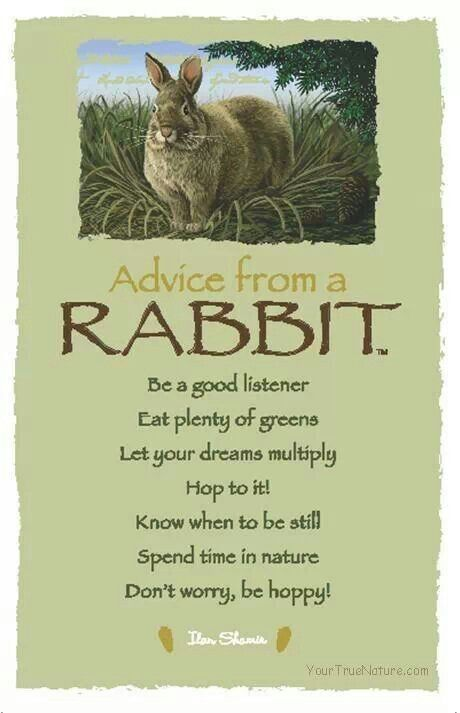 Advise from a rabbit