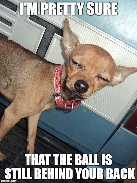 Suspicious Chihuahua Dog Meme Funny Pups Dogs Dog