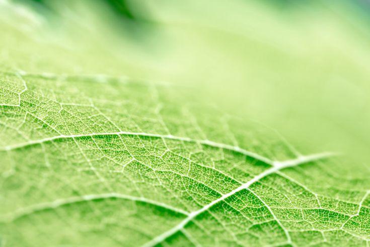 Doğal Bir Yapı, Yapraklar Pil Ömrünü Uzatabilir, 25 Kat Daha Fazla Enerji. Yapraklardan ilham alınan yeni teknoloji Pil Ömrünü 25x Uzatıyor