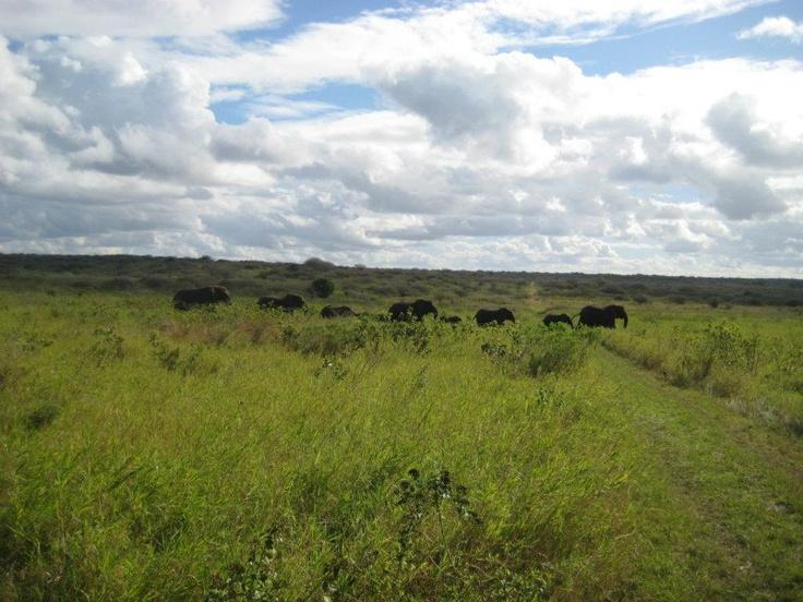 The Bonamanzi Elephants. Was 9 back then now we are at 12.