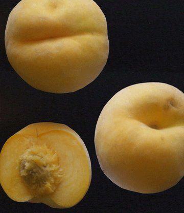 Персик-абрикос «Медовый месяц»