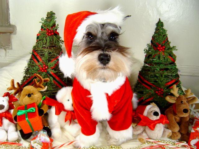 Cheap Christmas Stockings Online