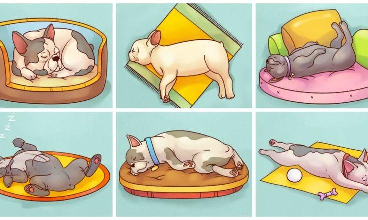 6 Posizioni di sonno del cane che rivelano qualcosa di straordinario sulla sua personalit?!