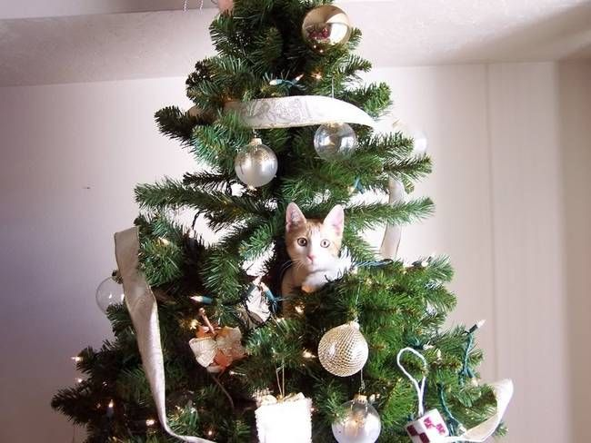 The Ginger Ornament. A Hilarious Compilation Of The Constant Battle Between Cats & Christmas Trees • Page 2 of 5 • BoredBug