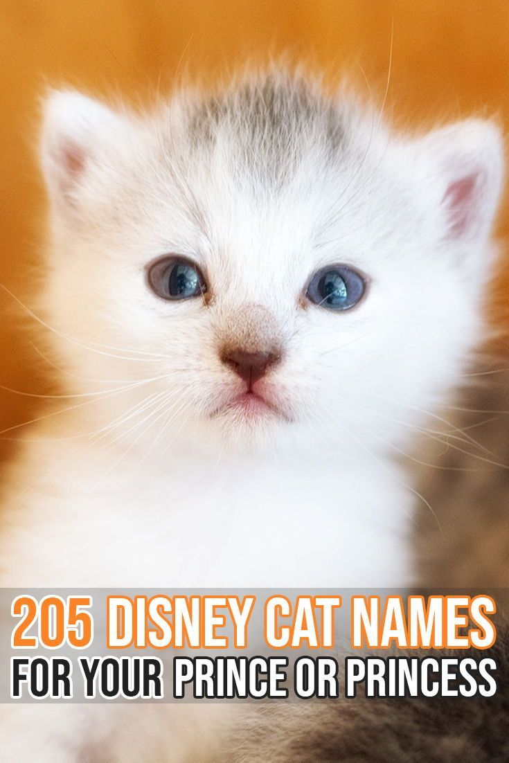 Felineliving Net Disney Cat Names Boy Cat Names Kitten Names Unique