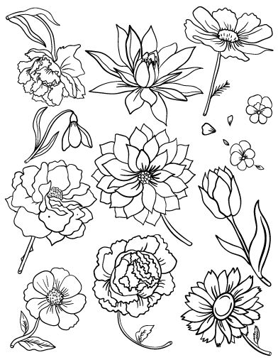Flower Coloring Pages Pdf : Best images about floral coloring pages for adults on