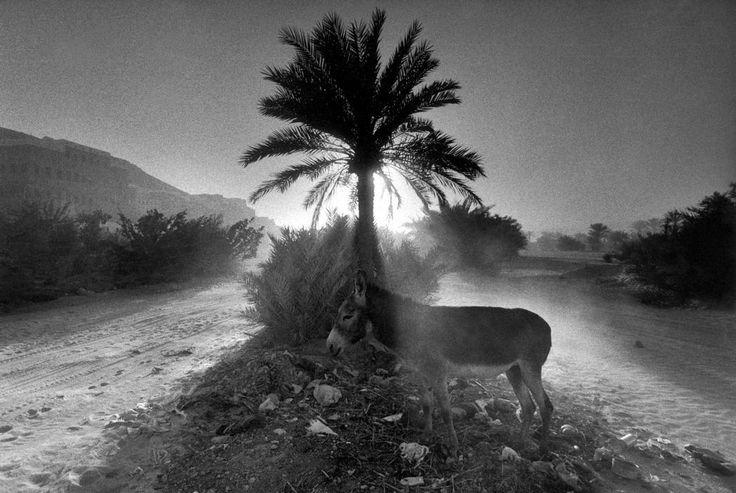 Yemen, 1999