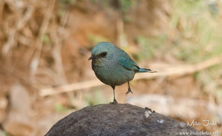 #birdphotography #birdsphotos  #birdsgallery #birdwatching #birding #birds #aves  #pajaros #pássaros  #鳥類  #fugle #vogelstand #oiseaux #Vögel #uccelli  #fugler #птицы  #kuşlar #hqspbirds #birds4all #birdloversandwildlife #wildbird