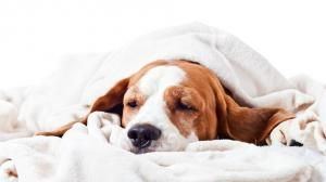 What can a dog with gastroenteritis eat and drink