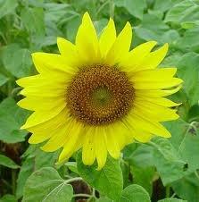 flowers - Google-haku
