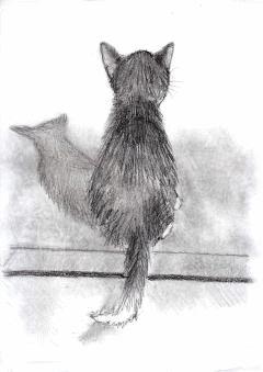 Varietats: Sanshu Seiso Cats