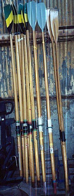 Antique tulip oars.