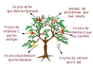 MORINGA OLEIFERA: Tout Sur L arbre Moringa
