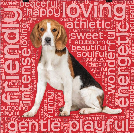 Pretty Beagle Lovers Poster With Breed Traits Dog Lovers Gift