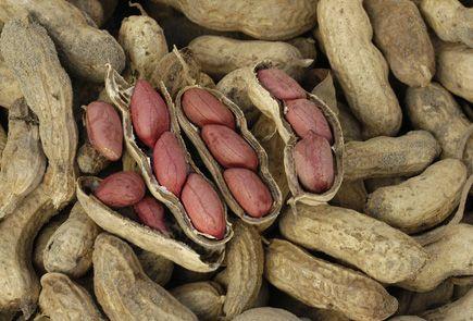 Growing Peanuts at Home