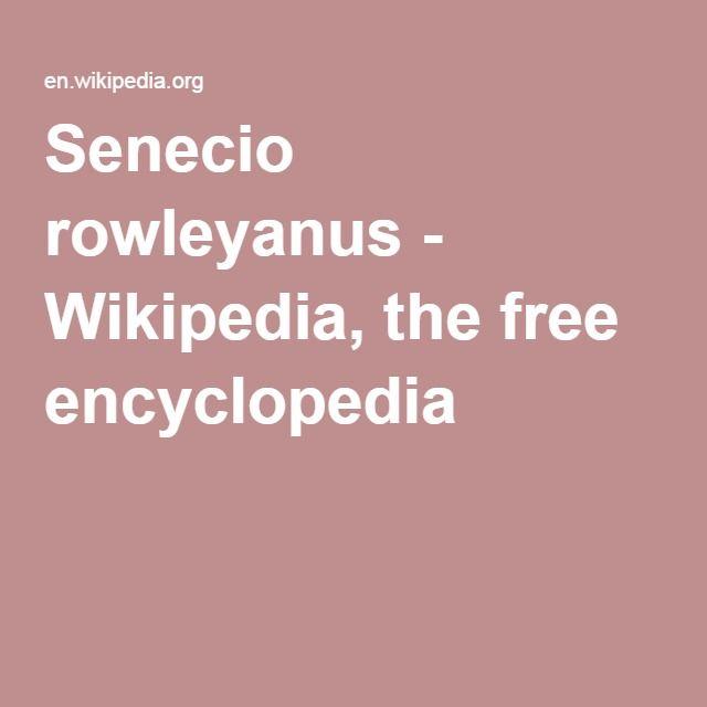 Senecio rowleyanus - Wikipedia, the free encyclopedia