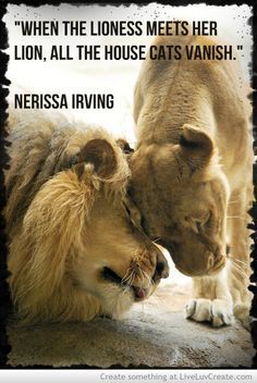 lion protecting lioness quotes - Google Search