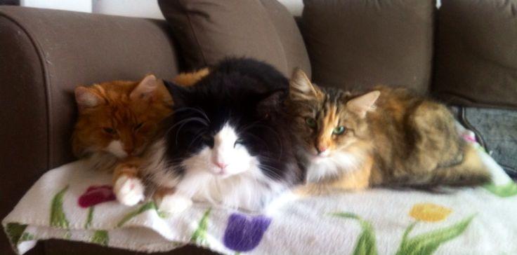 Leo,Ariel,Mimmi