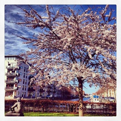 Spring Denmark at Christianshavn #denmark #spring #christiania #københavn #copenhagen #mycph #nickkarvounis #flowers #statue #waterfront (at Fotograf Nick Karvounis Photography)