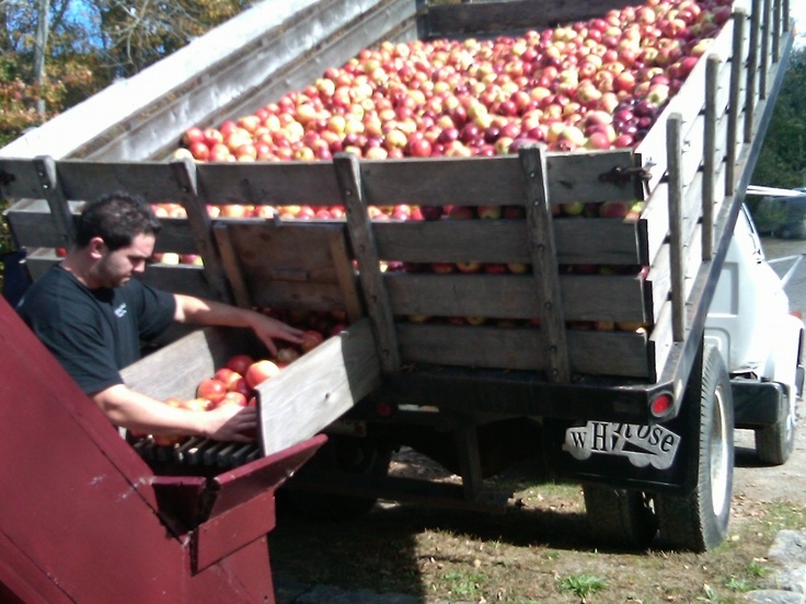 Clyde's Cider Mill - loading in the apples