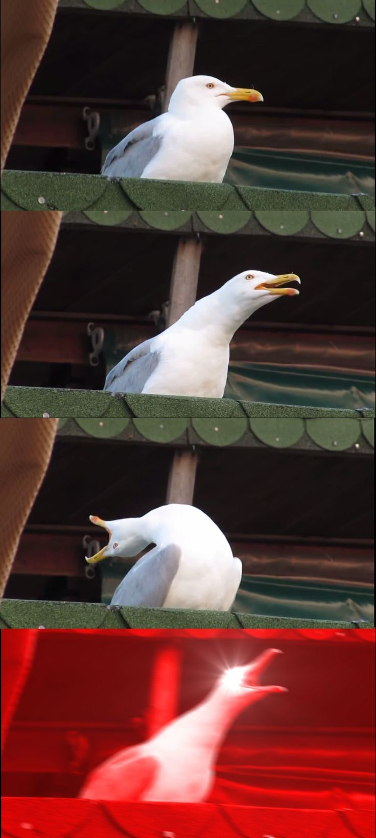 Inhaling Seagull Meme Template in 2020   Memes funny faces ...