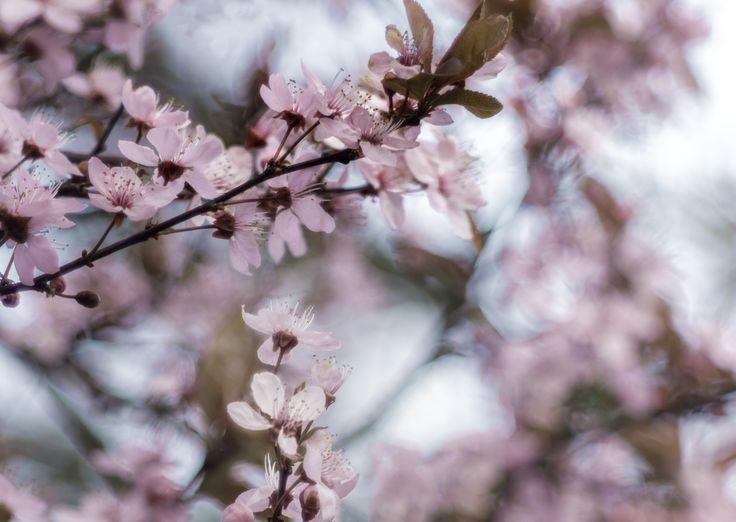 Friendly fresh. - in Pink dream.