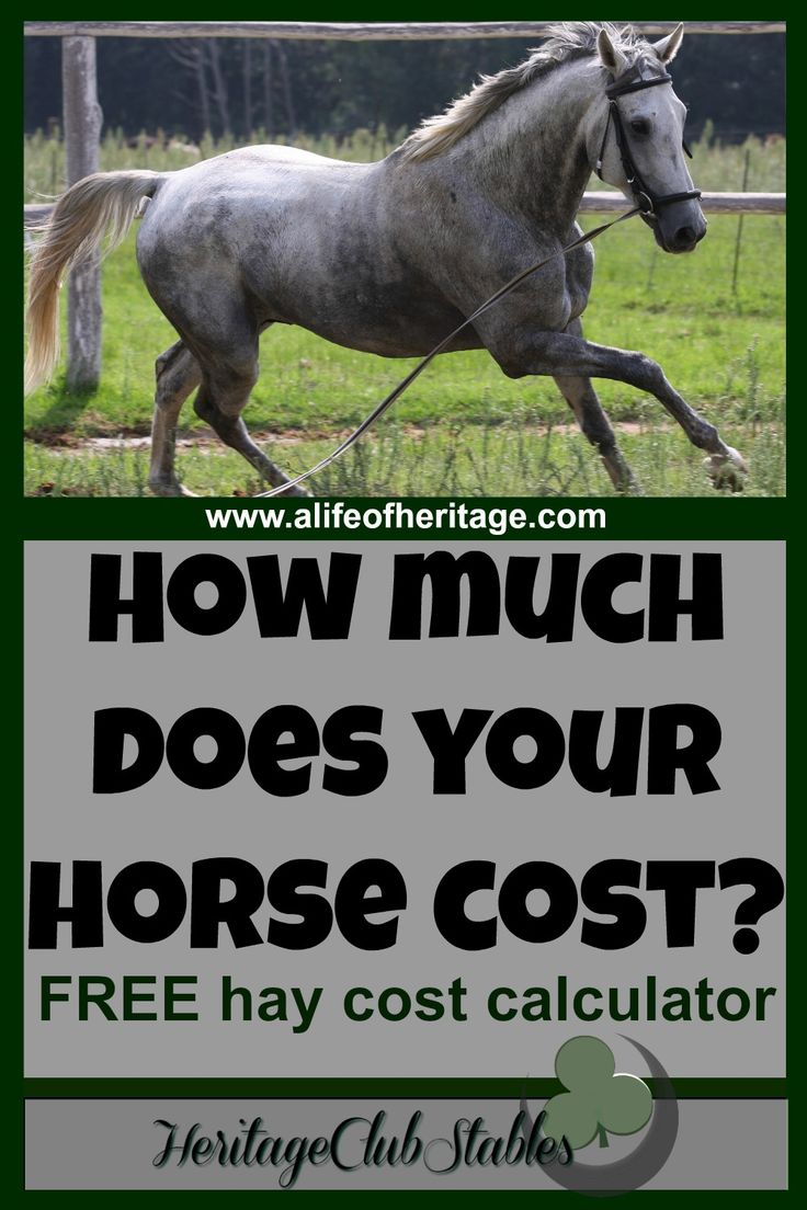 Horse Cost Calculator