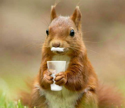 10 facts about squirrels you probably didn't know! – Squirrel appreciation day