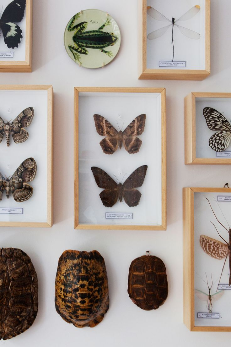 Renovated apartment in Amsterdam | photographer: Barbara de Hosson/Beeldig Beeld | vtwonen september 2014 #binnenkijken #decoration #magazine #buterrfly #wall