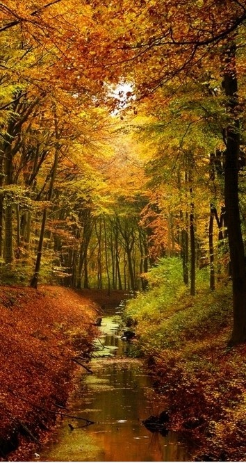 Autumn's glow in Groevenbeek, Netherlands • photo: Nelleke Pieters on deviantart