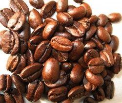 Kopi Luwak – Teuerster Kaffee Welt