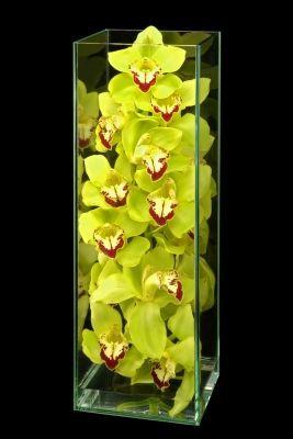 Orchids Enclosed Cymbidium orchids speak for themselves in this stunning, minimalist design.