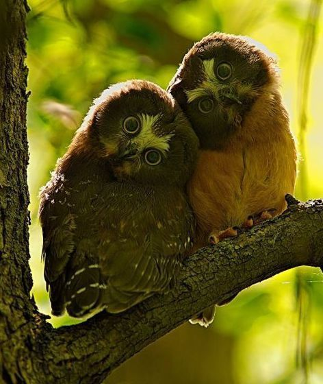 Hoot hoot!!: Awww, Whooo, Critter, Nature, Owl, Adorable, Things, Animal, Feathers Friends