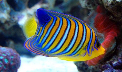 Pesce Bead portachiavi schema perline pesce portachiavi con le loro mani